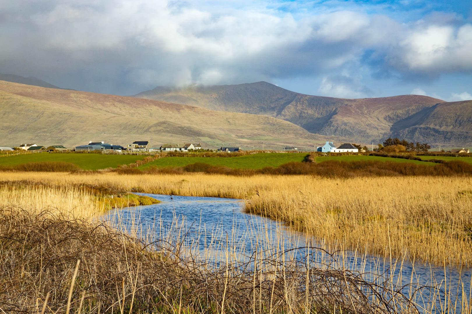 Schilflandschaft an einem Fluß auf der Dingle Halbinsel in Irland. Im Hintergrund die Berge